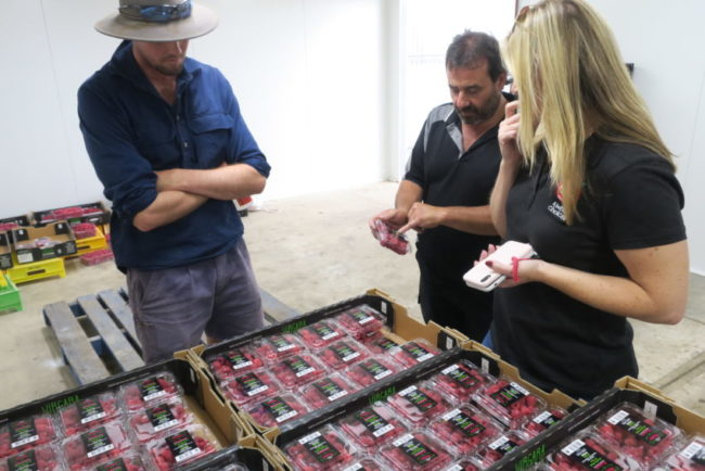 Rhys, Ross and Penny from Pick A Local Pick SA! inspecting the packed raspberries